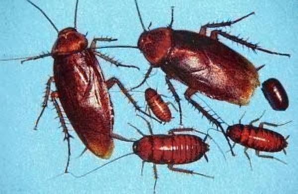 cockroach.jpg