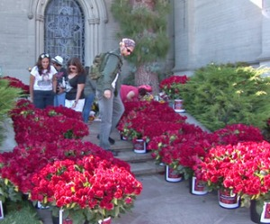 11,000 roses sent to MJ's grave on death anniversary