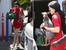 Kylie Jenner dresses her dog in Kylie hoodie