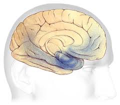 Fat levels in blood may lead to Alzheimer's