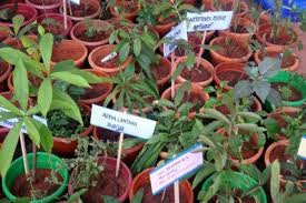 Kerala to streamline medicinal plants production