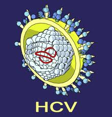 New therapy could help beat Hepatitis C virus