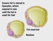 How can fat our body
