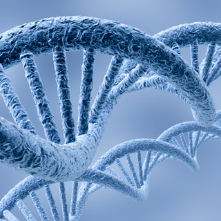 Genes pay role in low birth weight and later diabetes risk