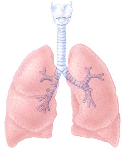 http://www.topnews.in/health/files/Lung.jpg