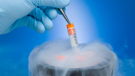 Frozen embryos boost IVF success