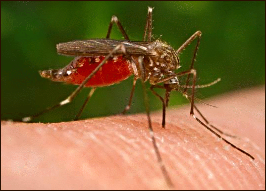Scientists find way to predict mosquito outbreaks