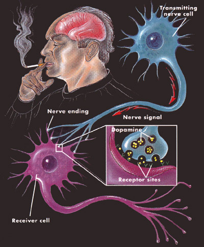 Biological basis of tobacco addiction: Implications for smoking.