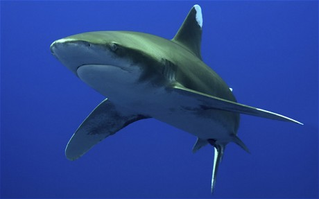 Shark brains `similar to humans`