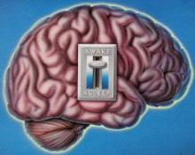 Brain 'switch' to improve blood circulation identified