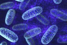 Mitochondria size matters in keeping blood sugar level stable