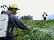 Beware! Exposure to insecticides may put you at higher risk of diabetes: Study