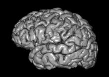 New study throws light on how brain stimulation affects memory reactivation