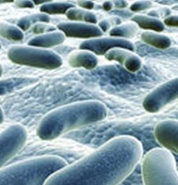 Beware! Food-borne bacterium may cause miscarriage threat early in pregnancy