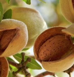 Allergic to any tree nut? Don't worry, now you can eat some