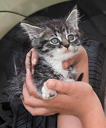 Kitten travels 12km hidden behind car's front wheel