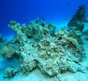 Ocean acidification slowly damaging coral reefs