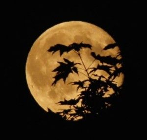 Will 'supermoon' set off 'end of world' on Aug 10?