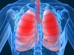 Lung regeneration for respiratory disorders comes closer to reality